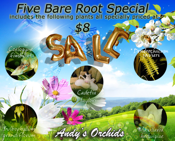 Five Bare Root Special